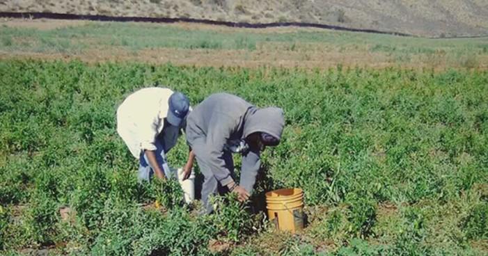 Ve Chapingo trampa en igualdad de salarios de trabajadores del campo por TLCAN