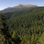 Campaña para que Senado no apruebe Ley Forestal que atenta contra bosques