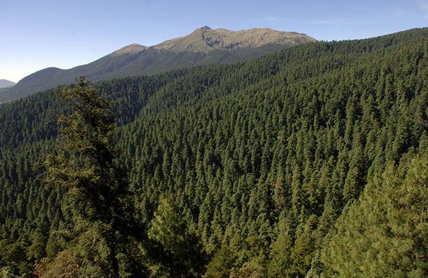 Bosque del Ajusco. Eduardo Miranda / procesofoto / DF 5 Junio 2009