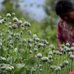 Las mujeres de la amapola en Guerrero