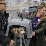 Rescatan 46 perros que serían comidos en Corea del Sur