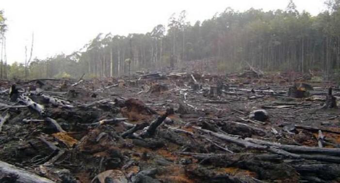 Talamontes clandestinos arrasan con 25 hectáreas de árboles en el Ajusco