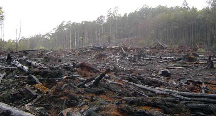 ajusco-deforestacion