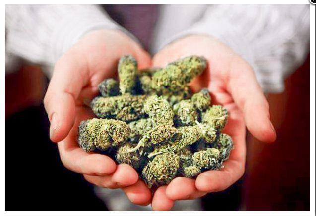 Frenan iniciativa de legalización de marihuana en Italia