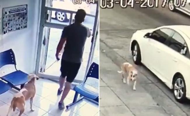 Abandona su perro en veterinaria, mientras el animal lo sigue