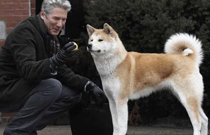 Hachi murió, el perro que salvó a su amo de una serpiente