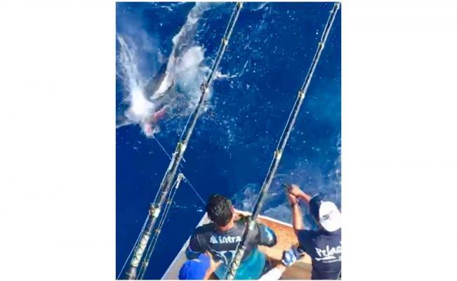 Pescan y matan a tiros a tiburón tigre en Veracruz