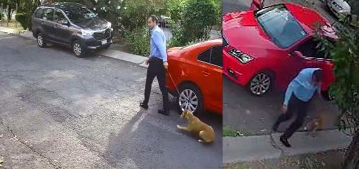 Automovilista abandona a su perro en Ecatepec