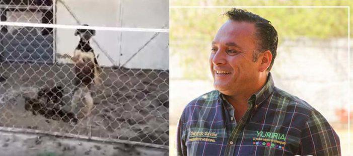Alcalde del Partido Verde sacrifica a 13 perros, ciudadanos suplicaron prórroga
