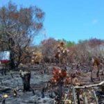 Profepa clausura 36 proyectos turísticos irregulares en Holbox