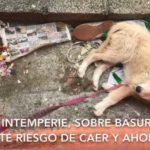 Rescatan a cachorra maltratada en Neza (video)