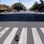 Persecución de perrito en Avenida Revolución termina en final feliz (VIDEO)