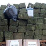 En sólo 6 meses se decomisaron 19 toneladas de droga