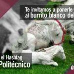 Politécnicos celebran nacimiento de burrito blanco en IPN Zacatenco