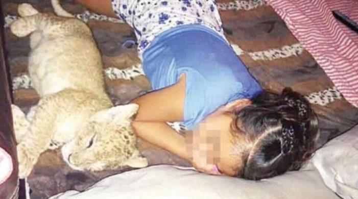 Hombre se dio el gusto de tener un león de mascota, lo consiguió por 40 mil pesos