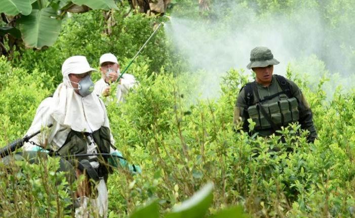 Narcocultivos de cárteles mexicanos se extienden a Guatemala