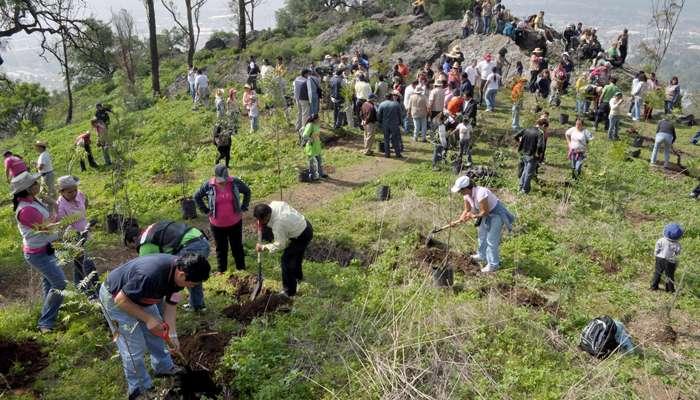 Avanza campaña de reforestación en Michoacán