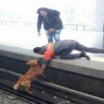 'Prefirieron limpiar las vías que quedaron llenas de sangre': acusan al Metro de no salvar a perro en Pantitlán