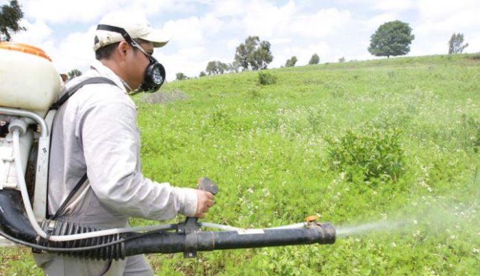 Greenpeace pide a Cofrepis prohibir plaguicidas