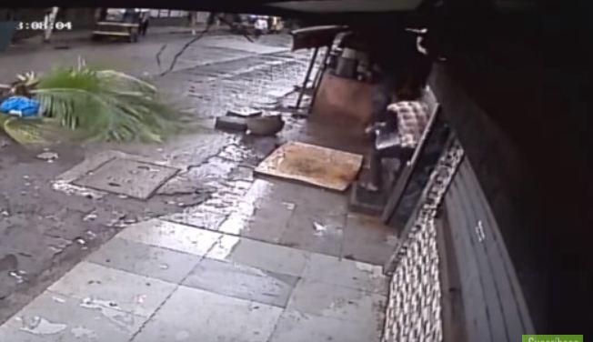 Muere reportera de la India al ser aplastada por palmera (VIDEO)