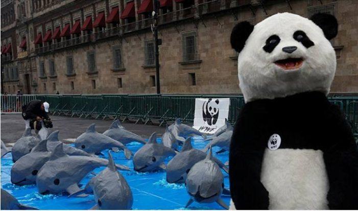 Entregan 220 mil firmas de 140 países a Semarnat para proteger a la vaquita marina