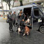 Detienen a delincuentes que usaban perros Pitbull para robar