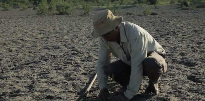 Sembró un árbol por 40 años y salvó su isla (Documental)