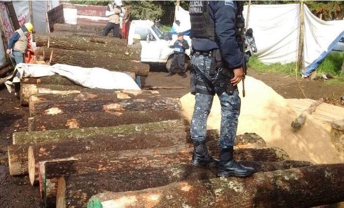 En operativo contra la tala clandestina en Tlalpan, clausuran 15 aserraderos