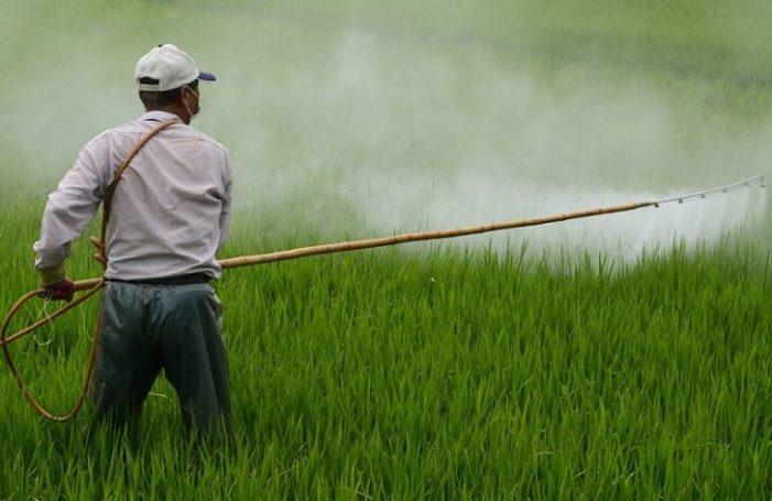 Investigan riesgos por uso incorrecto de pesticidas, pueden causar plagas