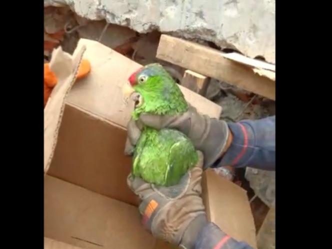 Rescatan a loro de los escombros del edificio en Coquimbo (Video)