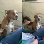 '¿Dónde andabas?' regañan a perrito por irse 'de vago' (Video)