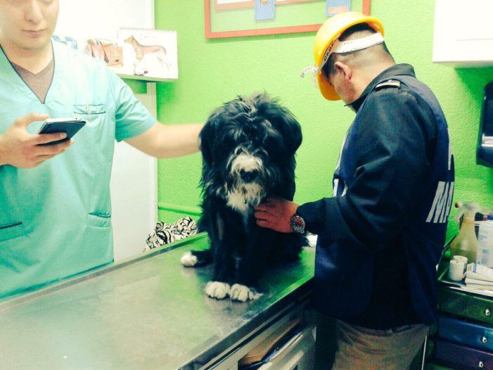 Rescatan con vida a 'Max', perrito que pasó 9 días bajo los escombros (VIDEO)