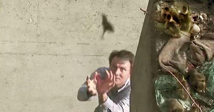 Salva a 11 patitos de caer de una gran altura (Video)
