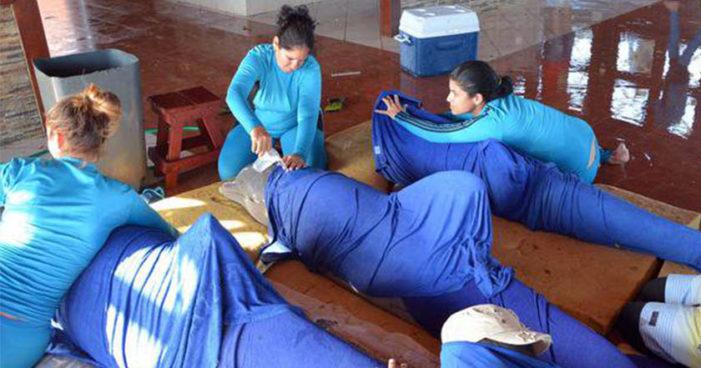 Ponen a salvo a delfines por huracán Irma en Cuba
