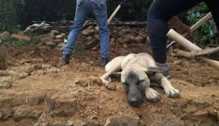 Jacinto aún espera a su dueño sobre los escombros