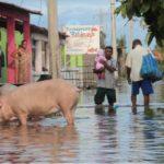 Huracán 'Max' deja más de mil 500 casas dañadas en Guerrero