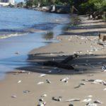 Temblor ocasionó fuga de Pemex y deja tres playas de Salina Cruz contaminadas