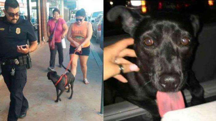 Una perra es deportada a México por matar a dos gatos