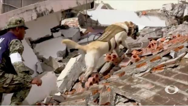 Perros de la Marina rescatan a 12 personas vivas de escombros en Oaxaca