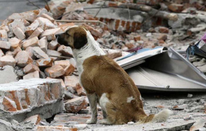 Hombre perdió su casa por sismo, se niega a ir a albergue y abandonar a sus 20 perros