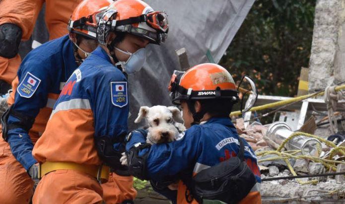 Japón ofrece asesoría para especializar a rescatistas que atienden sismos