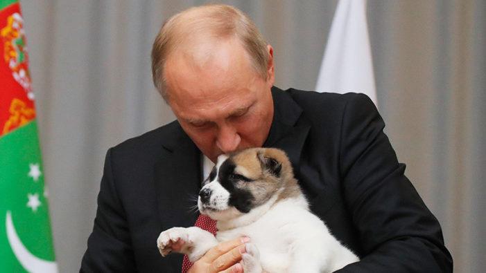 Putin apapacha cachorro que le regaló presidente de Turkmenistán (VIDEO)