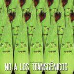 Hallan maíz transgénico y glifosato en tortillas y alimentos industrializados