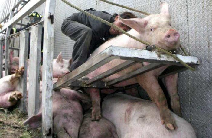 Darán de tres meses a seis años de cárcel por sacrificar a animales con crueldad