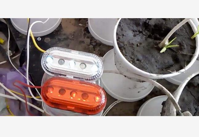 Desarrollan proyecto para generar energía eléctrica con plantas de ornato