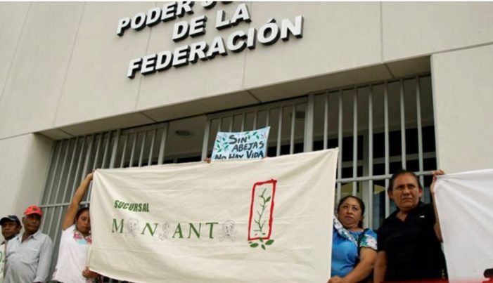 Campesinos mayas de Campeche acusan a juez de favorecer a Monsanto