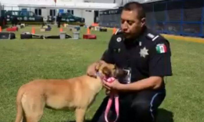 Rescatan a perrita tras el sismo y ahora forma parte de la Policía Federal