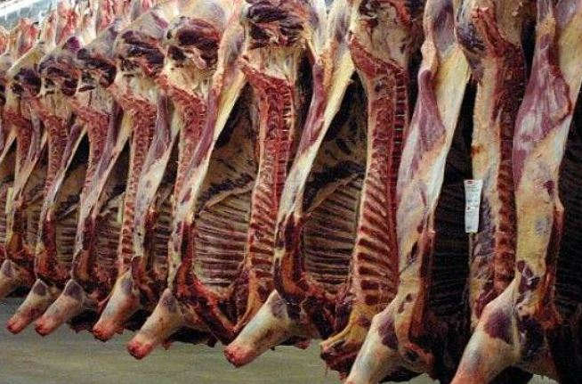 Fijan sanciones contra sacrificio inhumano de animales de rastro
