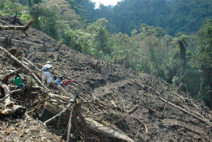 Crecimiento ganadero y cultivo de palma acaban con bosques y selvas mexicanas