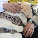 En honor a 'Frida rescatista' construirán clínica veterinaria en Coyoacán